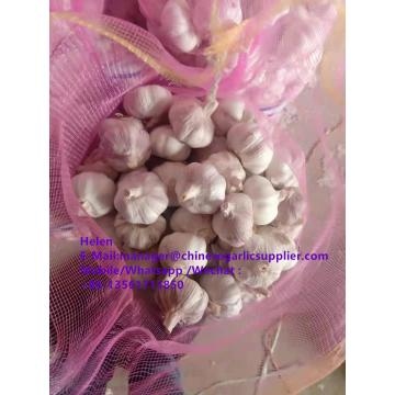 China Normal white garlic with meshbag pacakge to Paraguay market