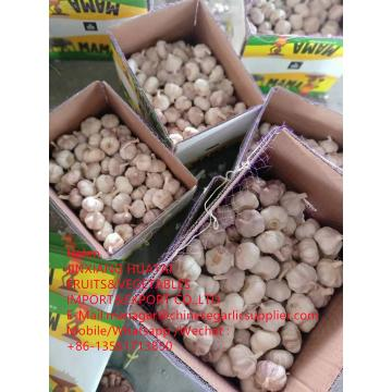 China Normal white garlic with 10KG Loose Carton packageTo African market