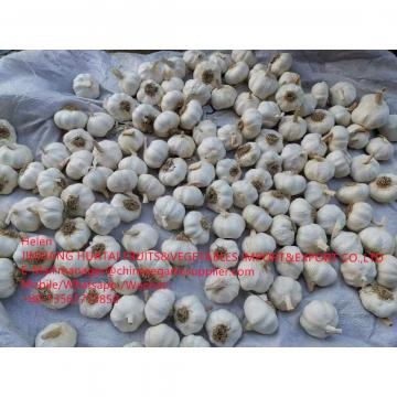 2021 NEW CROP PURE WHITE GARLIC WITH ROOT TO SPAIN MARKET FROM CHINA