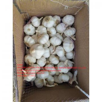 2021 NEW CROP PURE WHITE GARLIC WITH ROOT TO SPAIN MARKET