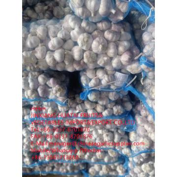 china normal white garlic with meshbag to Dominican Republic market