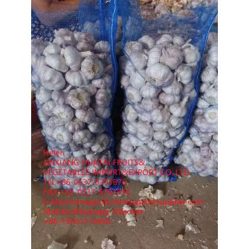 Top quality normal white garlic with meshbag to Dominican Republic market