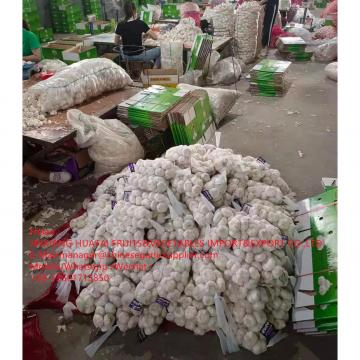 Pure white garlic with carton and meshbag package to EU Market