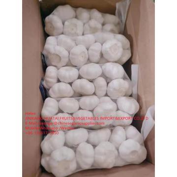 China Pure white garlic with carton and meshbag package to EU Market