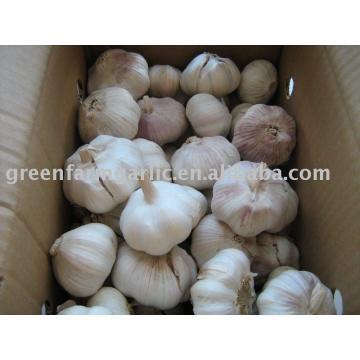 2011 lowest price chinese fresh garlic