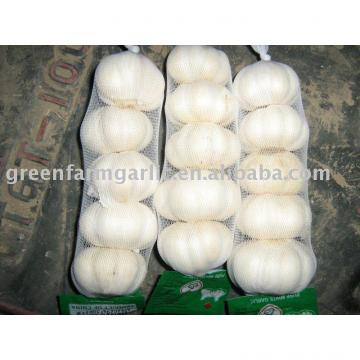white garlic in mesh bag