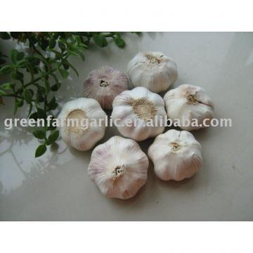 2017 snow white garlic
