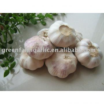 chinese normal/pure white garlic