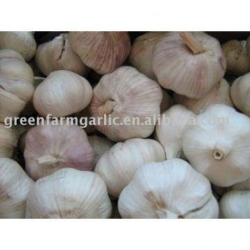 Jining greenfarm fresh garlic 2017