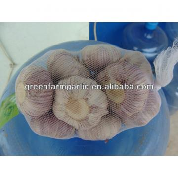 5cm fresh white garlic 500g bag