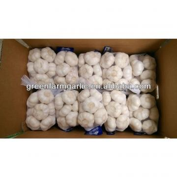 pure white garlic 1kg bag,10kg carton
