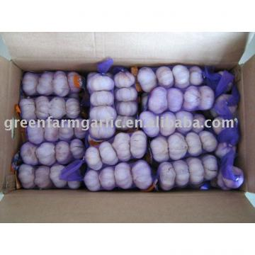 normal white garlic 200g in 10kg carton