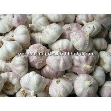 white garlic 5cm
