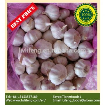 Best Price and Quality 2017 New Crop of Chinese White Garlic / Fresh Garlic