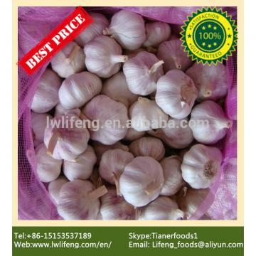 Most favourable Price of Chinese Purple Garlic / Red Garlic / Pink Garlic