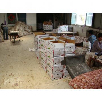 all the year supply Chinese high quality fresh Normal White Garlic / fresh Garlic