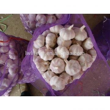 Supply Lowest Price of 2017 New Crop of Chinese Normal White Garlic / Red Garlic / Purple Garlic