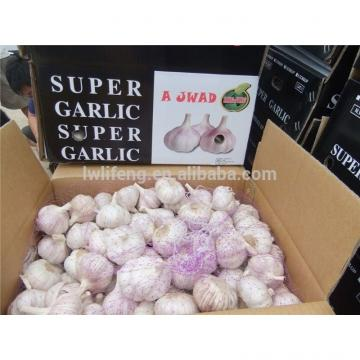 Manufacturer of 2017 New Crop of Chinese Normal White Garlic / Red Garlic / Purple Garlic