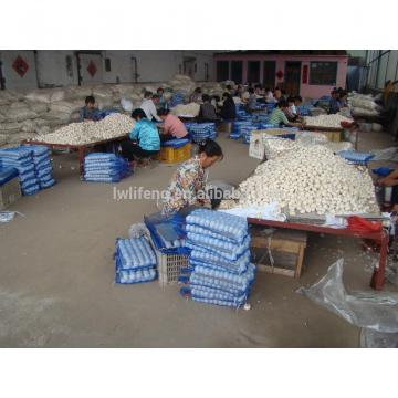 professional Manufacturer of fresh Chinese White Garlic / Normal White Garlic / Pure White Garlic