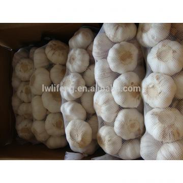 chinese fresh garlic