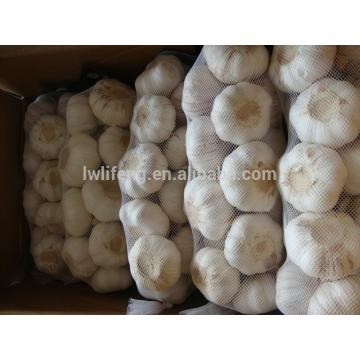 high quality jinxiang 5.0cm white garlic / fresh garlic / chinese garlic