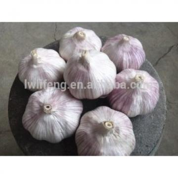 2017 new crop of chinese normal white garlic