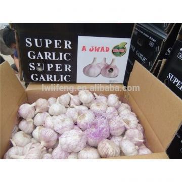 chinese 5.5cm perfect garlic