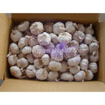 Most Favourable Price of 2017 Chinese Normal White Garlic / Fresh Garlic