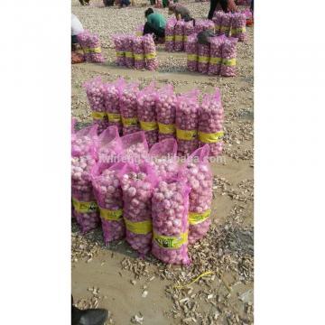 High Quality Chinese fresh White Garlic for sale / Pure White Garlic