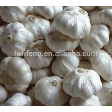 fresh Chinese White Garlic for sale / Pure White Garlic