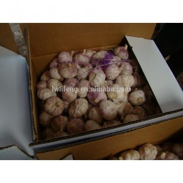 Top quality Chinese Normal White Garlic