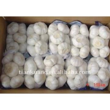 China pure white garlic