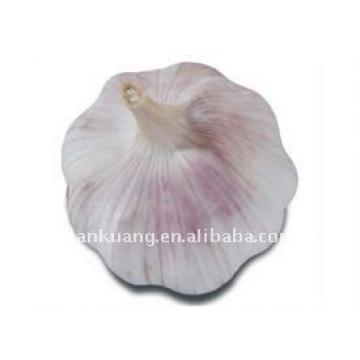 chinese normal garlic