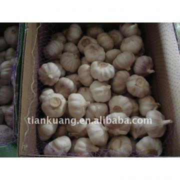 China export garlic