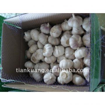 china garlic supplier