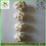 China's fresh garlic - shandong