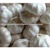 FRESH WHITE GARLIC PRODUCER