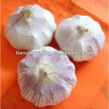 2017 fresh garlic from China