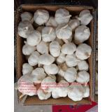 Top quality pure white garlic with carton pacakge to EU market