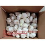 China pure white garlic with carton pacakge to EU market