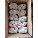 China Normal white garlic with carton package to UK Market