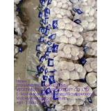 Normal white garlic with carton package to UK Market !