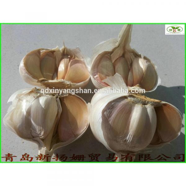 2017 Fresh China Garlic Production Price #1 image