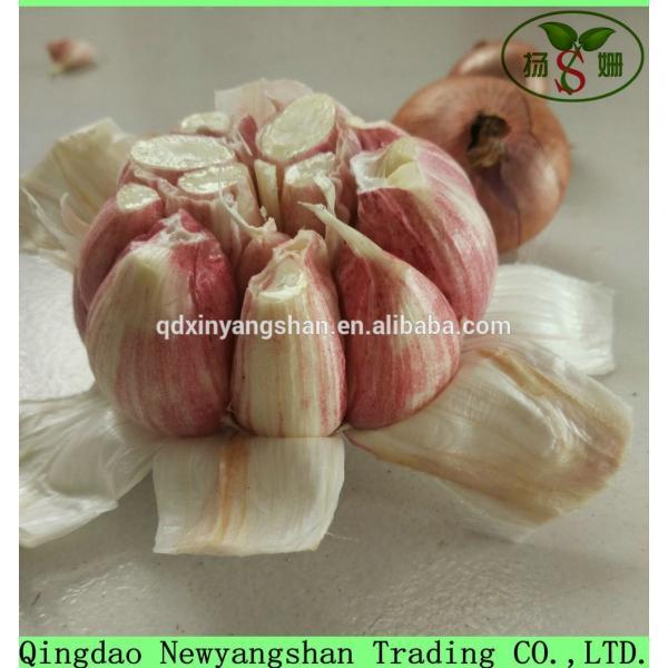 2017 Chinese Nature Normal/Purple Garlic Price #3 image
