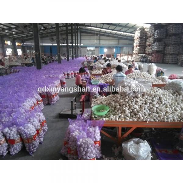 2017 Fresh China Garlic Production Price #3 image