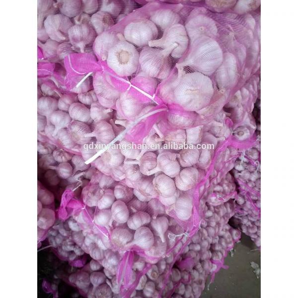 2017 Fresh China Garlic Production Price #4 image
