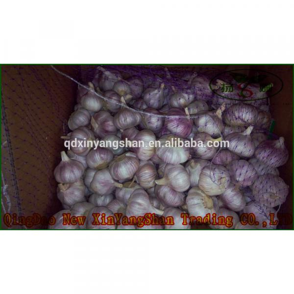 2017 Chinese Nature Normal/Purple Garlic Price #1 image