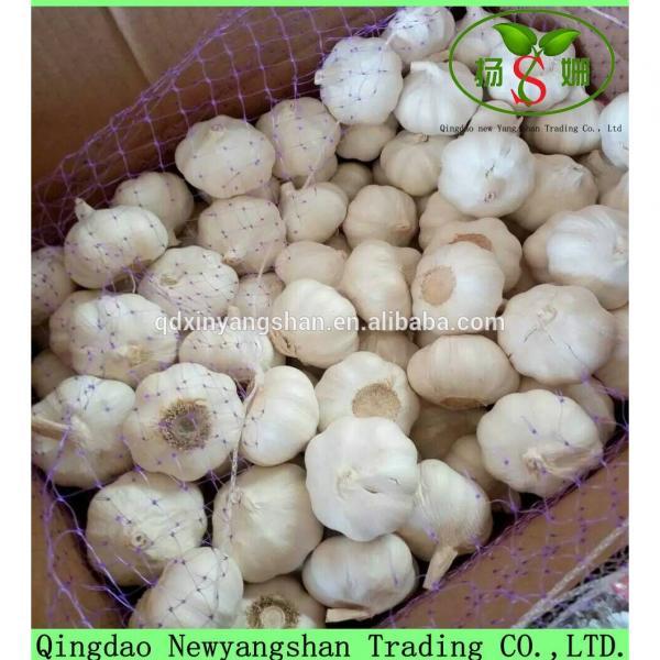 2017 Chinese Nature Normal/Purple Garlic Price #6 image