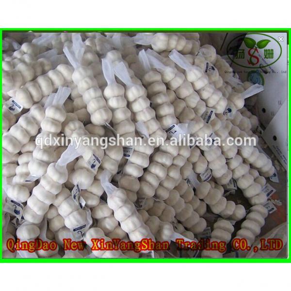 Fresh Chinese Jinxiang Garlic Price Per Ton Packing In Mesh Bag #2 image