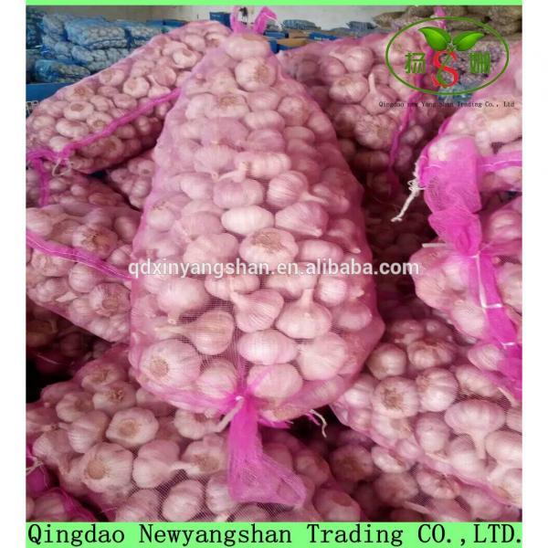 2017 Fresh China Garlic Production Price #6 image